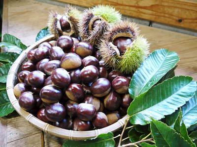 利平栗 栗の王様『利平栗』 今年も自然栽培で育っています!!_a0254656_17435828.jpg