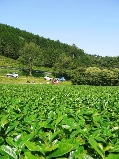 利平栗 栗の王様『利平栗』 今年も自然栽培で育っています!!_a0254656_18153262.jpg