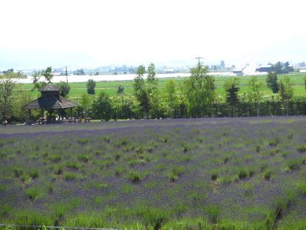 ファーム富田~風のガーデンへ_a0243064_20110516.jpg