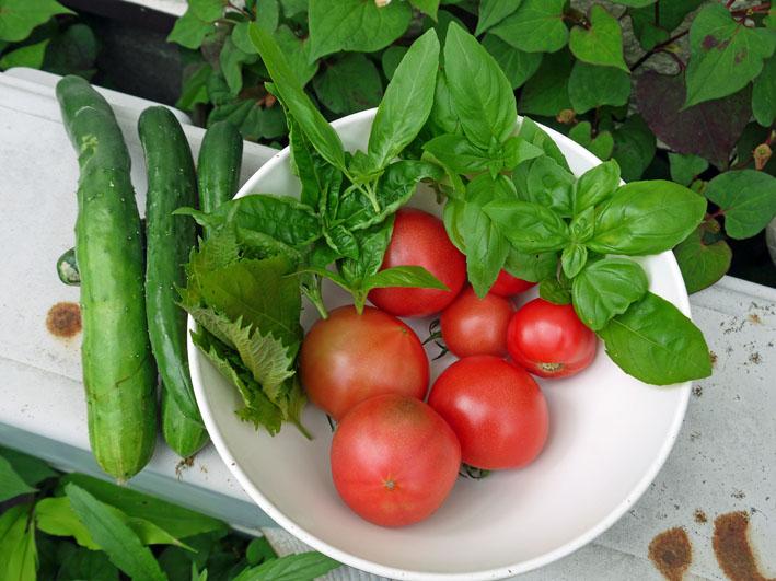 朝採りのトマト、キュウリ、バジル、アオジソ(6・30)_c0014967_1017198.jpg
