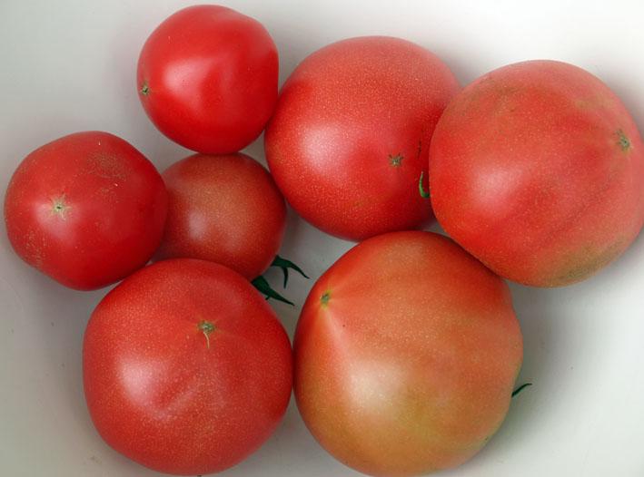 朝採りのトマト、キュウリ、バジル、アオジソ(6・30)_c0014967_10172121.jpg