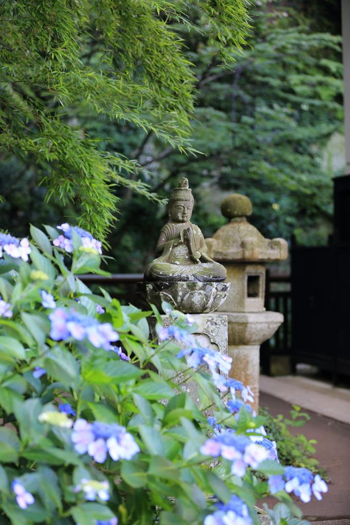 鎌倉と紫陽花_b0275998_10343183.jpg