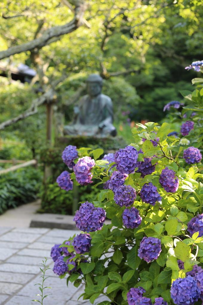 鎌倉と紫陽花_b0275998_1035921.jpg
