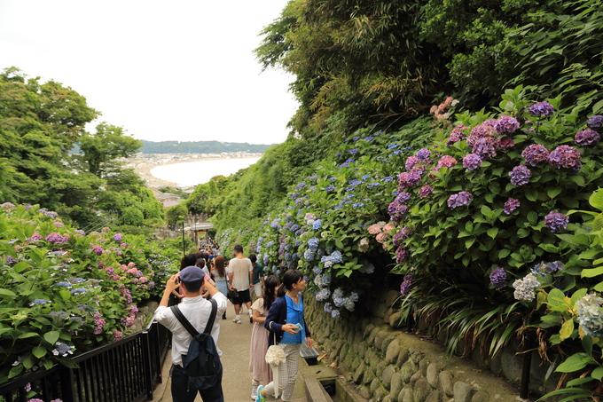 鎌倉と紫陽花_b0275998_10401850.jpg
