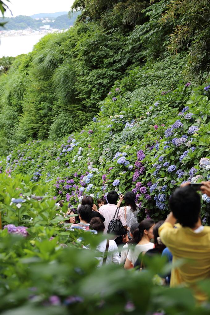 鎌倉と紫陽花_b0275998_10404558.jpg