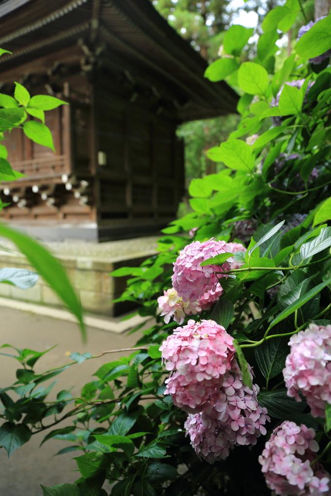 鎌倉と紫陽花_b0275998_10425088.jpg