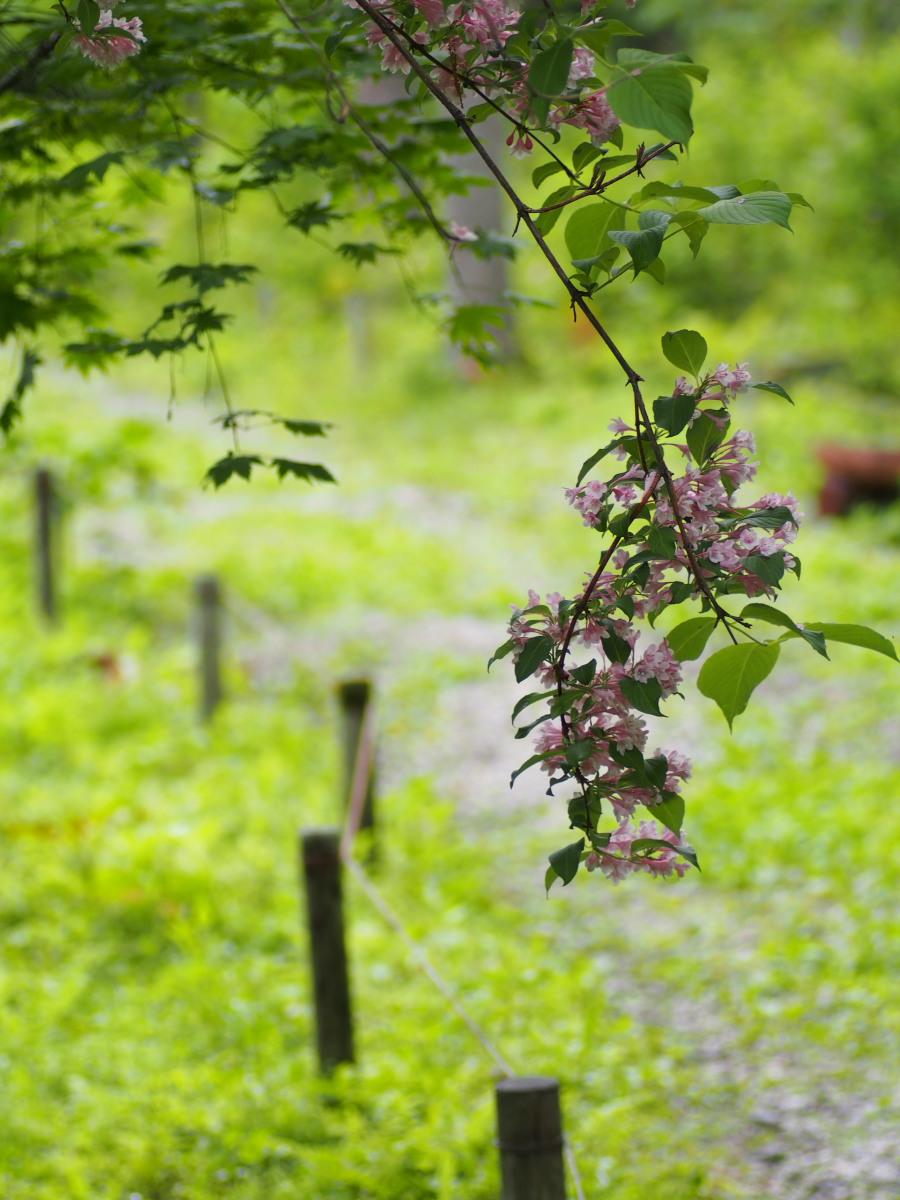 里山の森の中で_e0169421_21531579.jpg