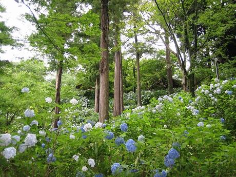 筑波山と紫陽花とセキュリティの変更_b0100229_16322497.jpg