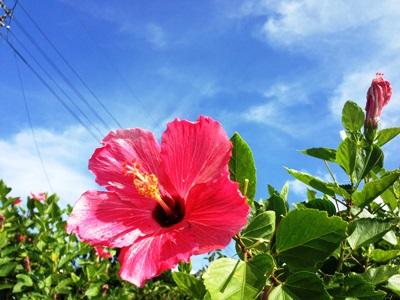 7月1日 今日も暑い与那国島!_b0158746_16291972.jpg