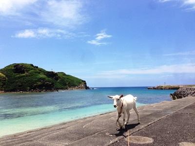 7月1日 今日も暑い与那国島!_b0158746_1646163.jpg