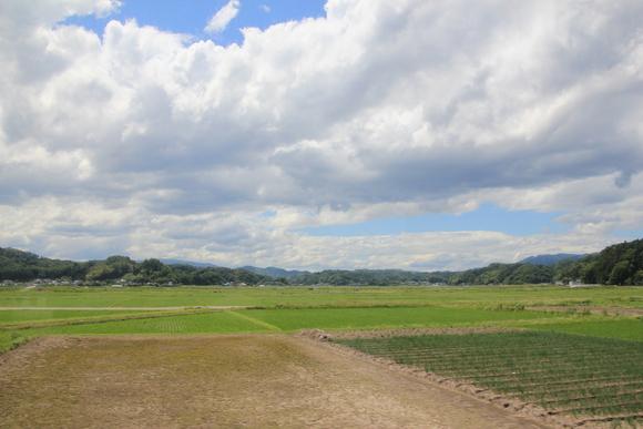 緑豊かな風景_d0202264_5582519.jpg