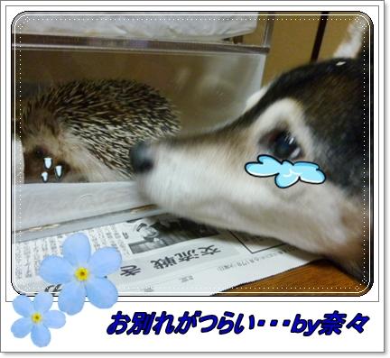 b0085874_00232918.jpg