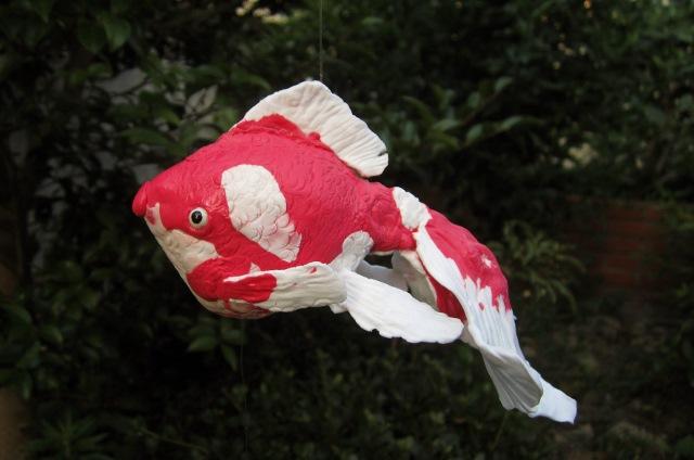 金魚が我が家に♪_c0009275_095098.jpg