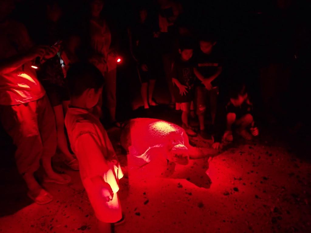 6/30 ウミガメ産卵観察講習会_a0010095_17161712.jpg