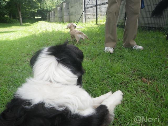 【犬】お散歩にて_f0141609_22501675.jpg