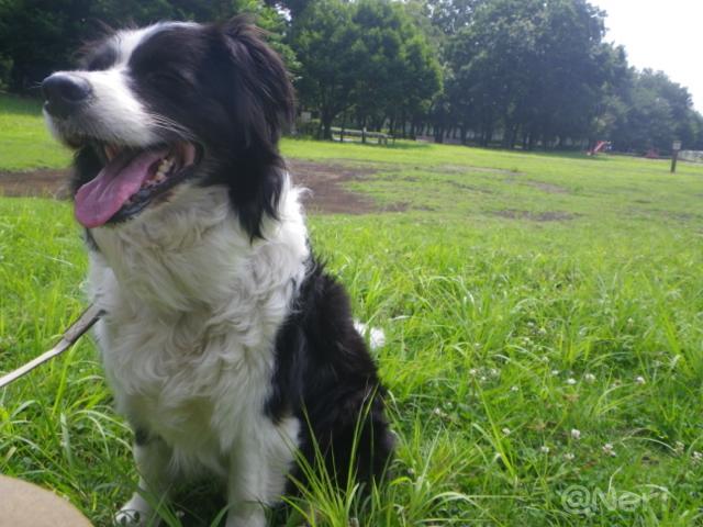 【犬】お散歩にて_f0141609_22503694.jpg