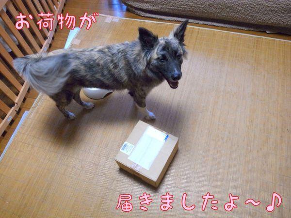 f0329311_1649647.jpg