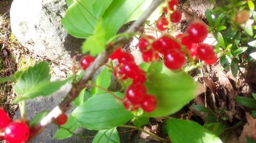 7月を迎えましたね・・大好きな桃の季節_e0131324_642569.jpg