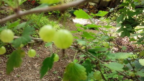 7月を迎えましたね・・大好きな桃の季節_e0131324_79357.jpg