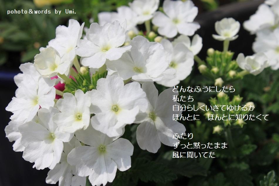 f0351844_11122930.jpg