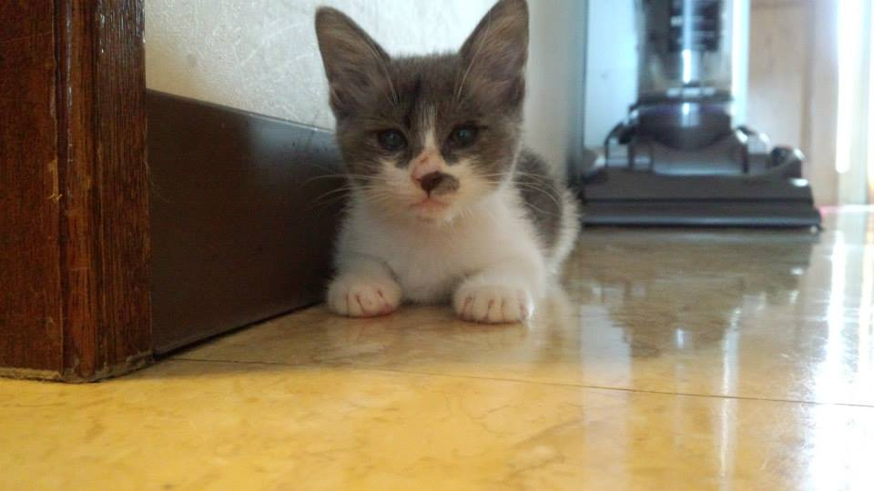 Kitten._c0153966_1111311.jpg