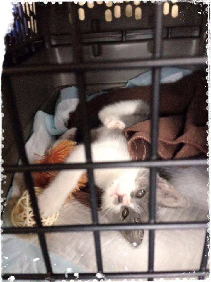 Kitten._c0153966_11114966.jpg