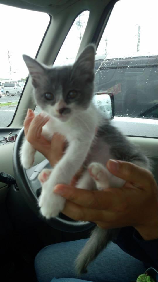 Kitten._c0153966_1111681.jpg