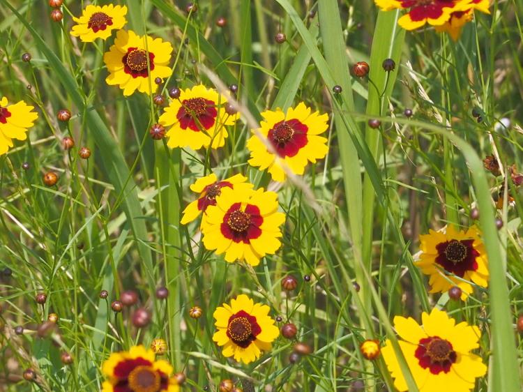 散歩の収穫     _f0208666_16231665.jpg