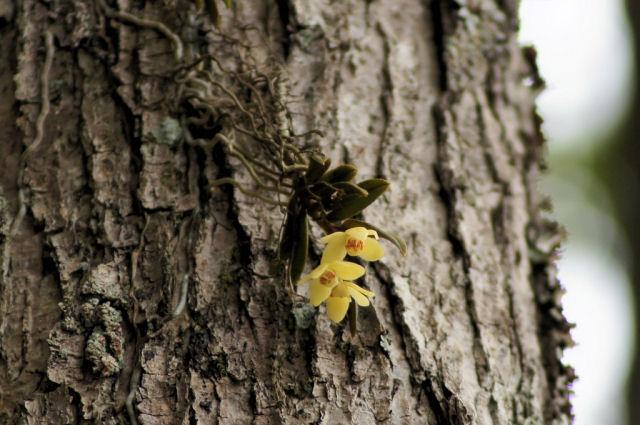 大野自然観察の森_f0219710_7183450.jpg