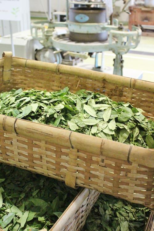 発酵茶ラボ_b0220318_15112397.jpg