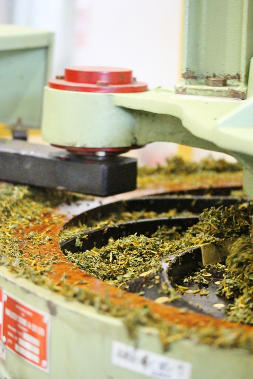 発酵茶ラボ_b0220318_15122057.jpg