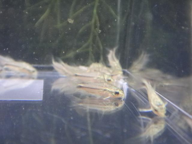 140703 熱帯魚・水草・金魚_f0189122_144711.jpg