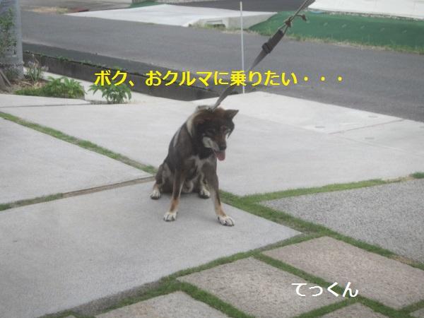 f0143123_9502581.jpg