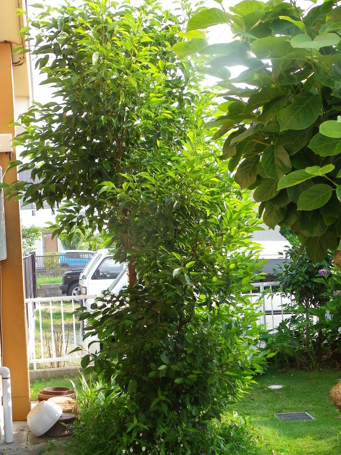 ミドリシジミの卵 庭のハンノキで_d0254540_1914240.jpg