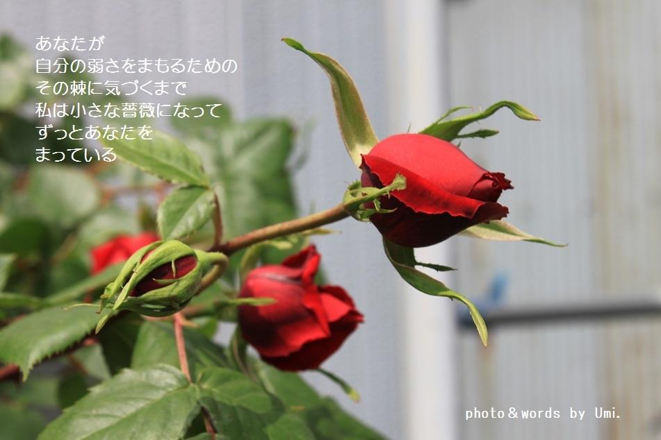 f0351844_09480175.jpg