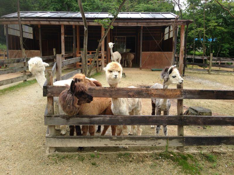 のんびりアルパカ牧場 : ハンド...