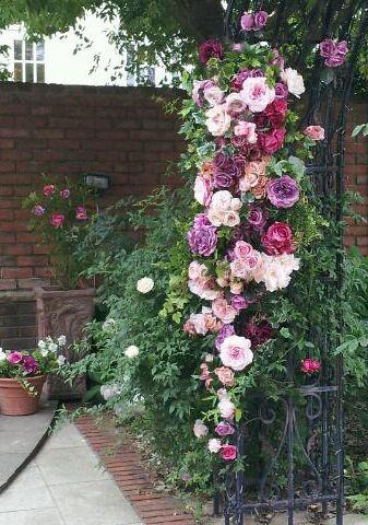 バラの背景、空間つくり_d0049817_1118547.jpg