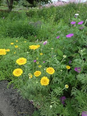 ロックガーデンの花たち14_b0219993_14352341.jpg