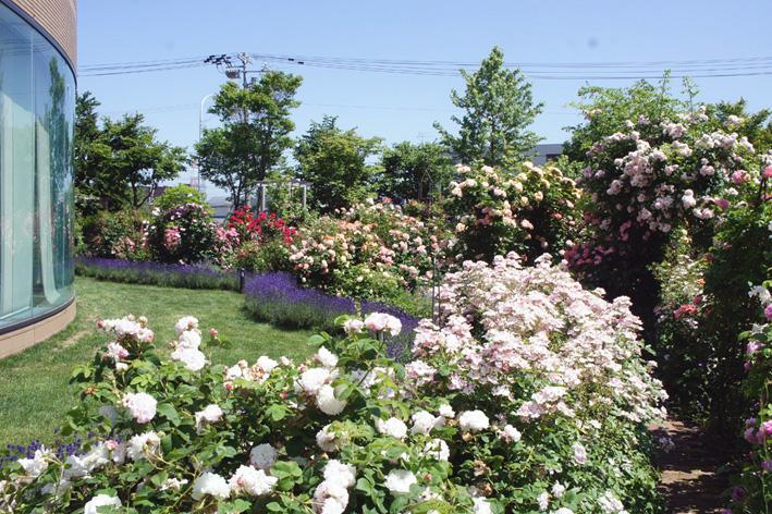 ローズ(ショー)ガーデン!_f0160407_4515678.jpg