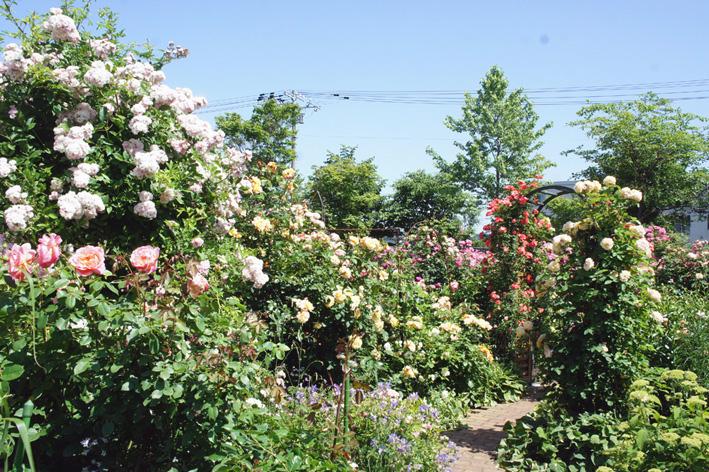 ローズ(ショー)ガーデン!_f0160407_4522050.jpg