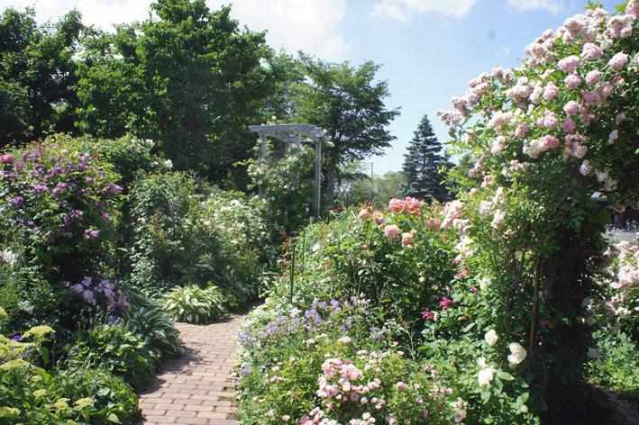 ローズ(ショー)ガーデン!_f0160407_4532456.jpg