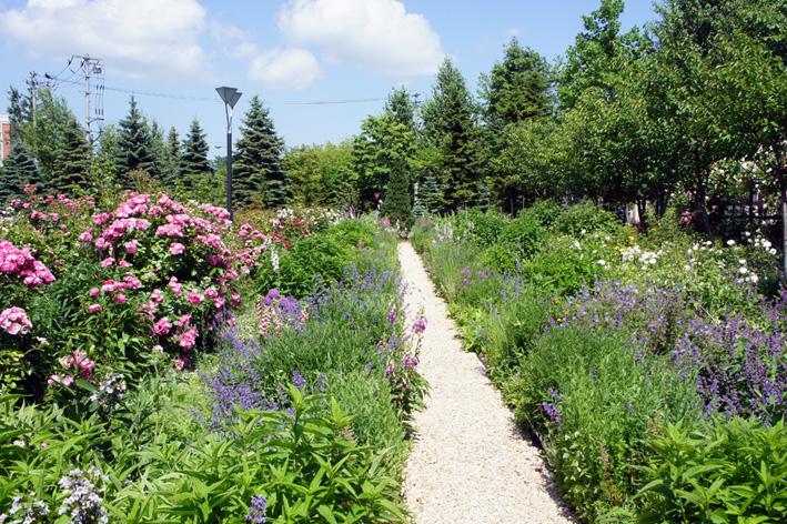 ローズ(ショー)ガーデン!_f0160407_4534435.jpg