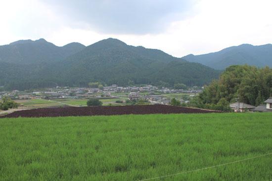 大原の紅シソ畑_e0048413_2039533.jpg