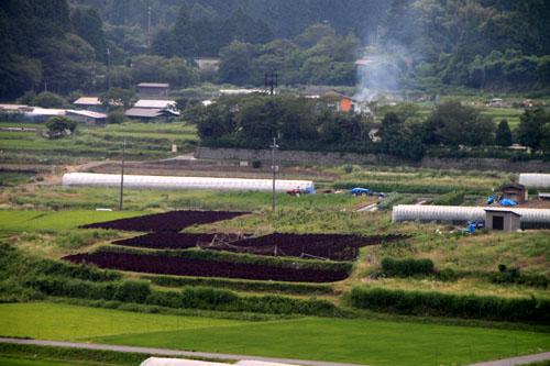 大原の紅シソ畑_e0048413_2040373.jpg