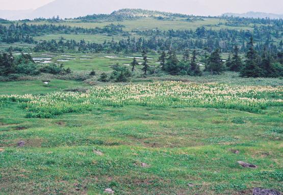山頂が高山植物と池塘が点在する広大な高層湿原の名山_a0113718_4485950.jpg