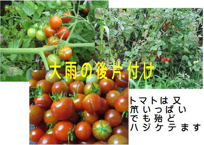 f0003174_1614621.jpg