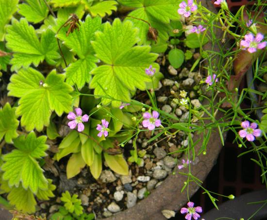 水色の小さな紫陽花と、今咲いている花を少し♪_a0136293_17552236.jpg