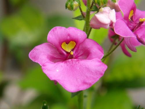 水色の小さな紫陽花と、今咲いている花を少し♪_a0136293_1812434.jpg