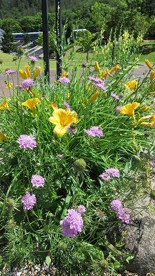 ロックガーデンの花たち15_b0219993_16102558.jpg