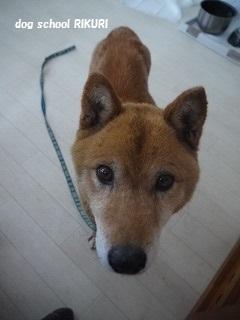 保護犬さん。_a0284100_9501585.jpg